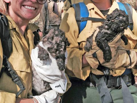 Disse krabatene ble reddet fra skogbrannen i siste liten