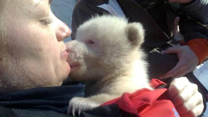 Det har vært mye bjørnenytt de siste dagene! thumbnail