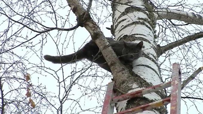 Søt katt reddet ned fra tre av snill nabo, kan det bli bedre? thumbnail