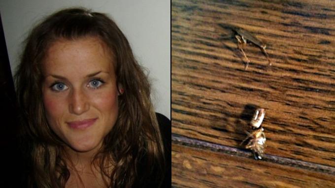 Nå er kakerlakker synonymt med forfall og andre ulekkerheter! thumbnail