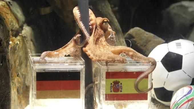 Har virkelig blekkspruten Paul overnaturlige evner! thumbnail