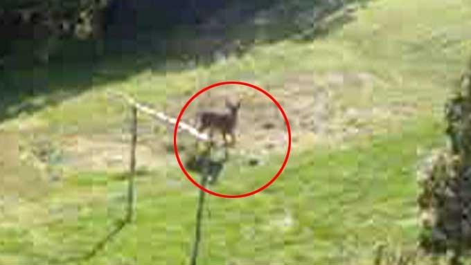 Hjort er hjort og kan ikke gjerast om, men baller har dem alle? thumbnail