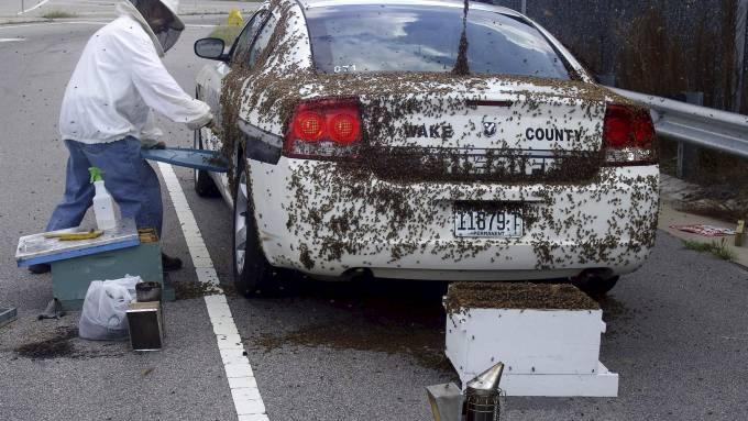 Å bi eller ikke bi var spørsmålet politimannen Brandon Jenkins ble stilt ovenfor! thumbnail