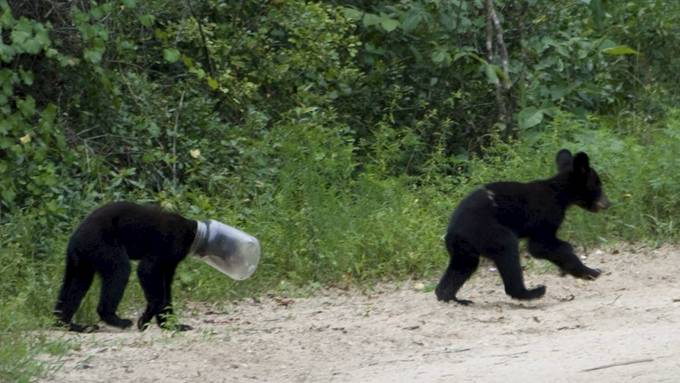 Nå vil selvfølgelig en svoren honningelsker som en bjørn kan sies å være! thumbnail