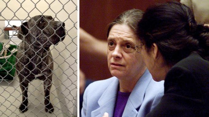 Hund bet i hjel nabo, og hundeeier en kvinne er dømt til fengsel på livstid! thumbnail
