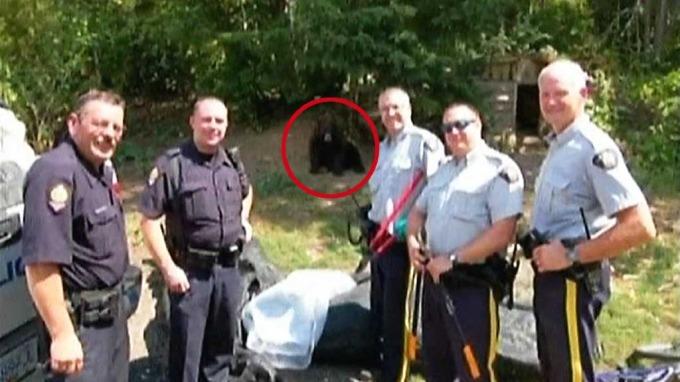 Ti bjørner voktet marihuana-plantasje, men klarte ikke å holde onkel på avstand! thumbnail