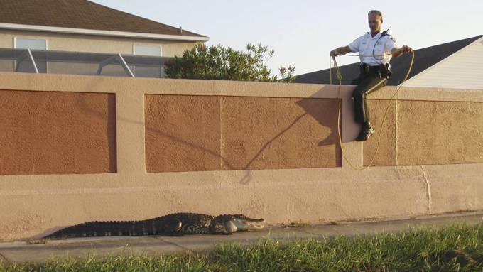 Onkel politi måtte legge alligator i håndjern ved barneskole! thumbnail