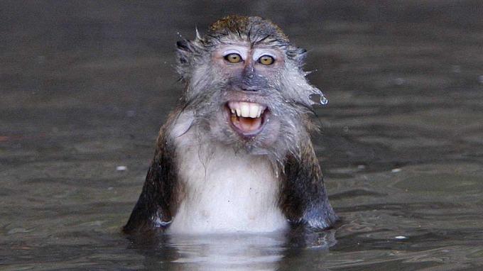 Nyfødt baby drept av ape, en makak-ape fra Malaysia! thumbnail