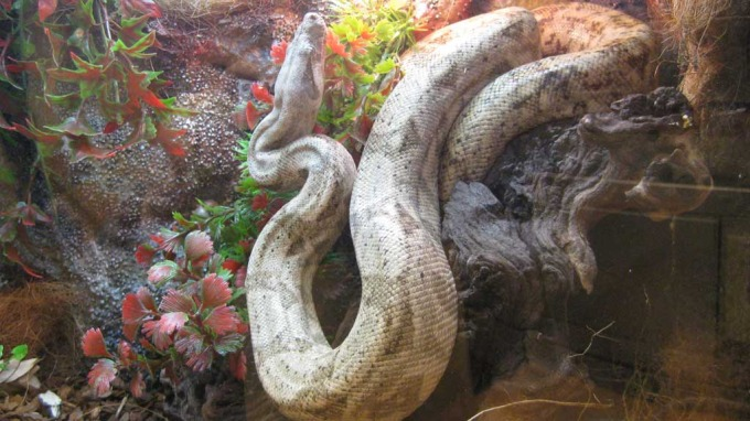 Det fleste av oss liker ikke slanger, nakkehårene reiser seg! thumbnail