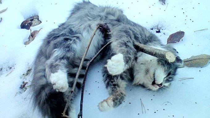 Mennesker som torturere og dreper en stakkars katt burde kjølhales under en båt thumbnail